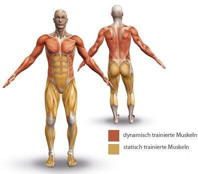 WaterGrinder Muskeln